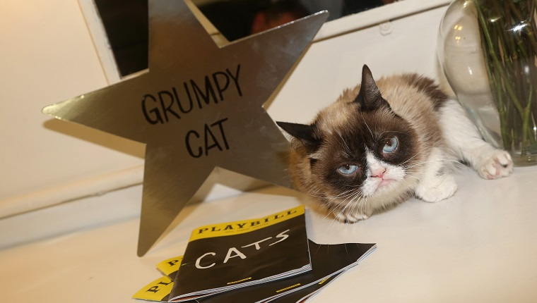 """NEW YORK, NY - SEPTEMBER 30: (EXCLUSIVE COVERAGE) Grumpy Cat relaxes in her dressing room as she makes her broadway debut in """"Cats"""" on Broadway at The Neil Simon Theatre on September 30, 2016 in New York City."""