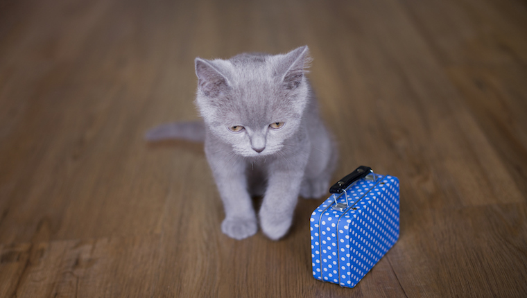 Kitten with suitcase