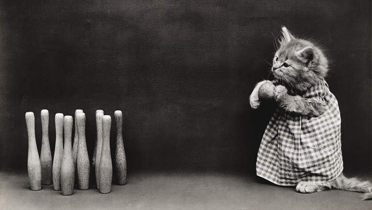 Kitty bowling ten pins (by Whittier Frees, American, 1879 - 1953), from a series of dressed kittens in various human situations, circa 1914. Silver print.