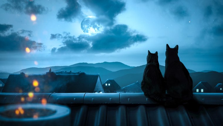Cats watch moon at night