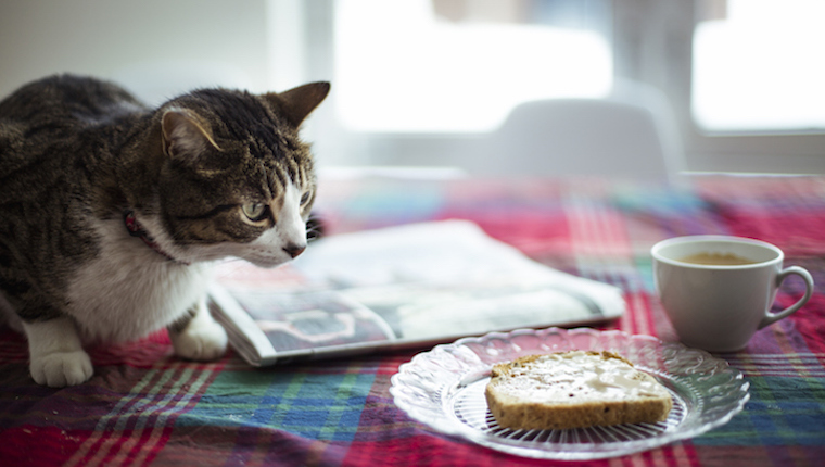 Cat looking at bread