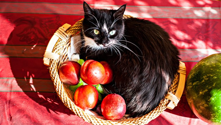 Cat in basket of peaches