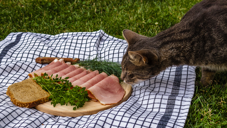 Cat eating a plate of ham