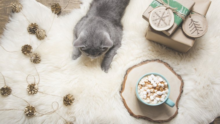 Cat and marshmallows