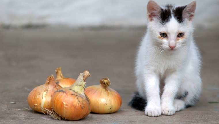 The image of a cat and bulbs