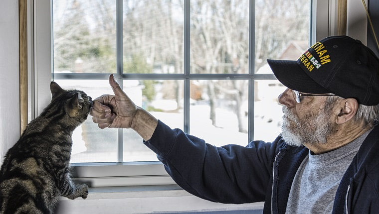A real person 67 year old United States Navy Vietnam War military veteran is playing with and talking to his pet striped domestic tabby cat who is balanced on a bedroom window sill.