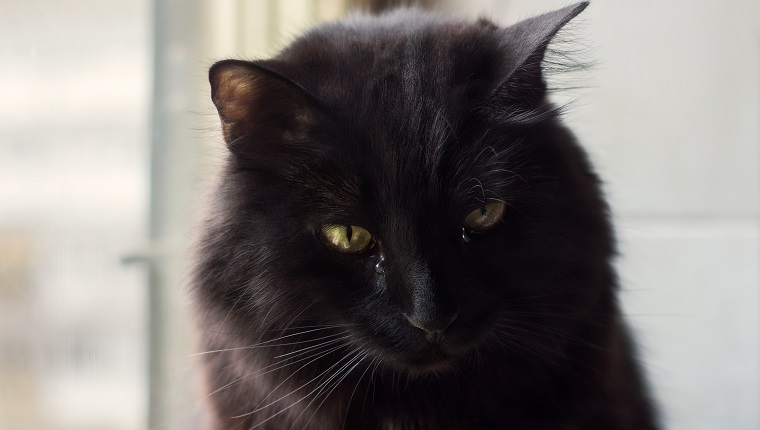 Black tomcat sitting by the window looking down sad, tears on his cheeks