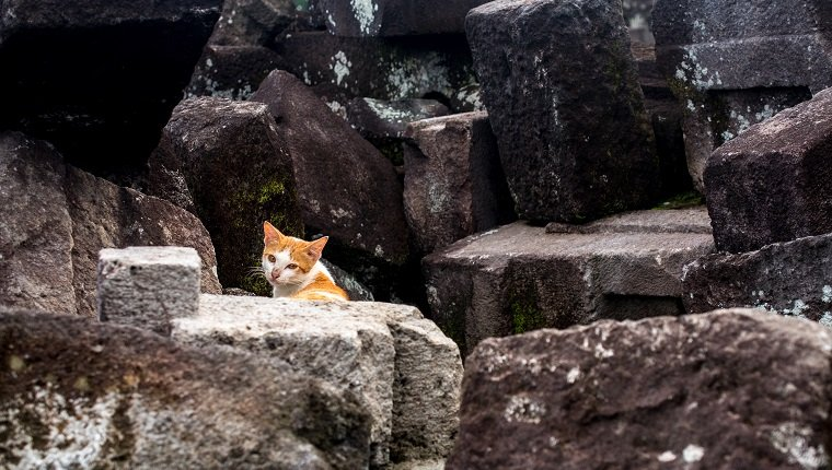 hungry wander cat was hunting among the stones which fell down during the last earthquake