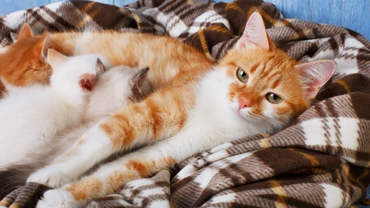 How Long Are Cats Pregnant And What Happens During Pregnancy Cattime