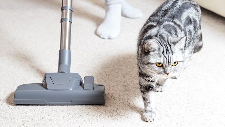 Vacuum cleaner. Carpet hoover. Cleaning. Cat hair.