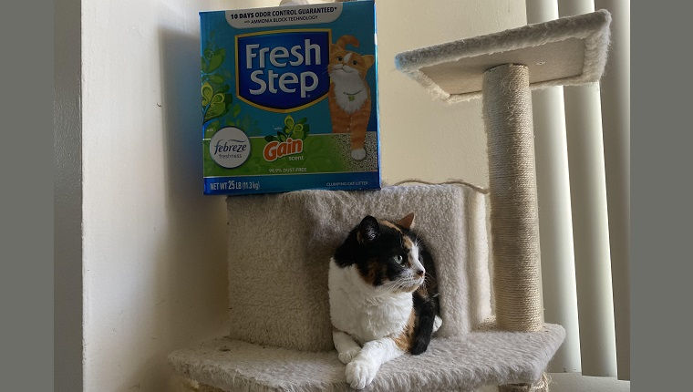 Pookie with fresh step on cat tree