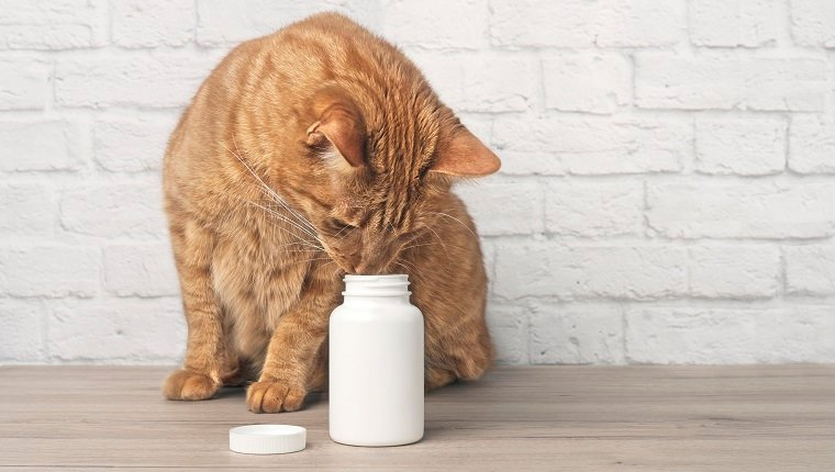 Red cat looking curious to a open pill box, maybe famciclovir. Horizontal image with copy space.