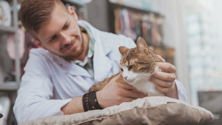 Handsome young male veterinarian doctor smiling, petting beautiful cat, working at his vet clinic. Cheerful vet examining adorable cat, copy space