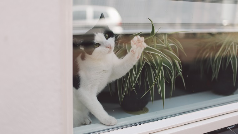 Portrait Of Cat Sitting By Potted Plant On Window Sill