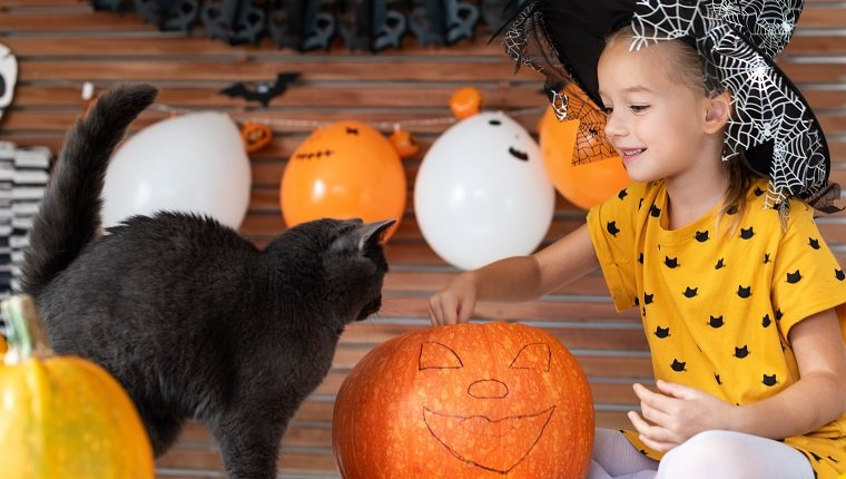 Girl in witch halloween costume sitting on a table playing with pumpkin and her pet cat. Halloween lifestyle background.