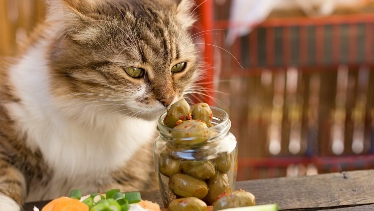 Beautiful cat knows what is healthy food - a healthy diet (olive) cat snuffs olive