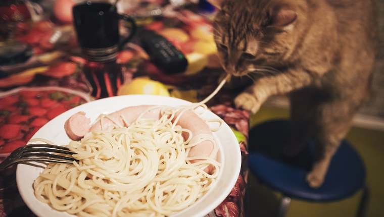 Pasta Food and Ginger Cat