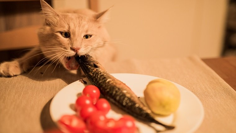Funny hungry cat stealing fish from a domestic table.