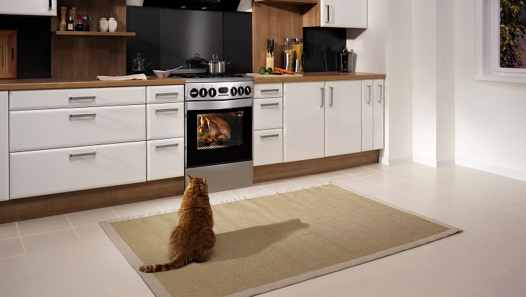 Cat looking at a cooking turkey in the oven.