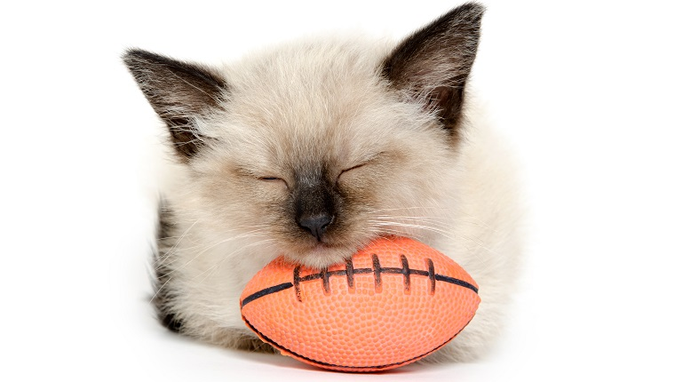 Cute baby cat laying its head on a football and taking a nap on white background