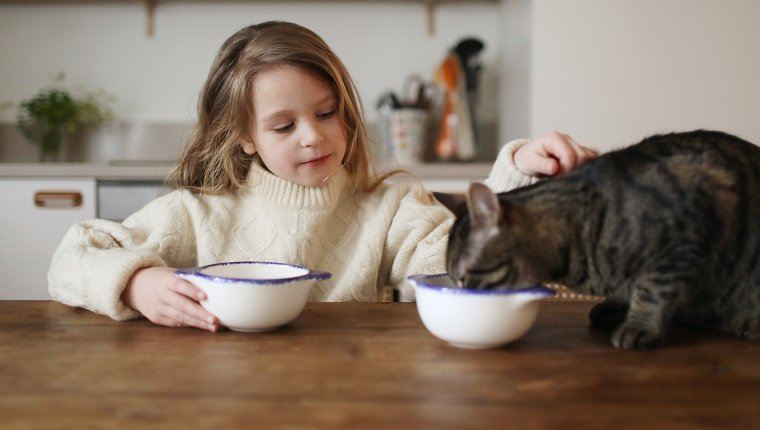 A 6 year old girl having her breakfast with her cat