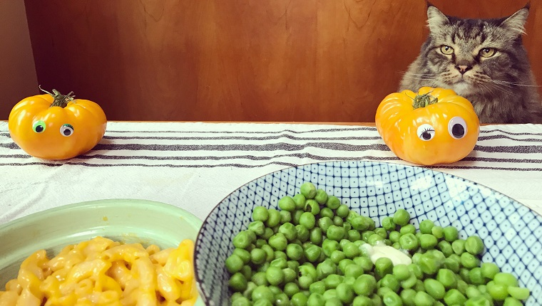 Humorous portrait of a Maine Coon cat sitting at a dinner table next to tomatoes with googly eyes and bowls filled with peas and butter and macaroni and cheese.