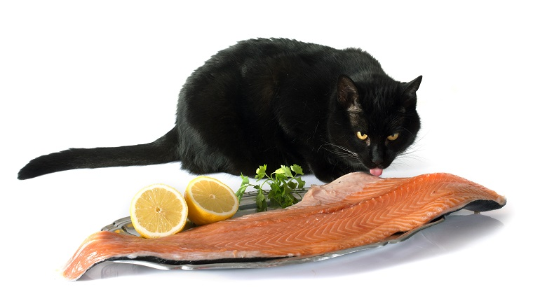 cat and salmon in front of white background