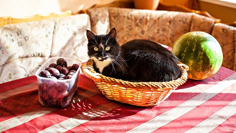 Funny black-white cat lying in the fruits basket