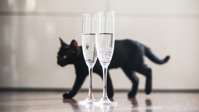 Black cat and champagne. Good luck concept