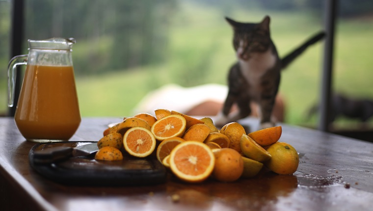 Homemade orange juice with orange slices a a cat in the background