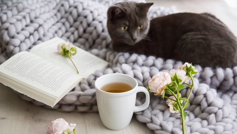 Little grey cat snuggling down on a hand knitted grey woolly rug alongside a hot mug of tea or herbal infusion and pink roses on an open book in a concept of relaxation at home
