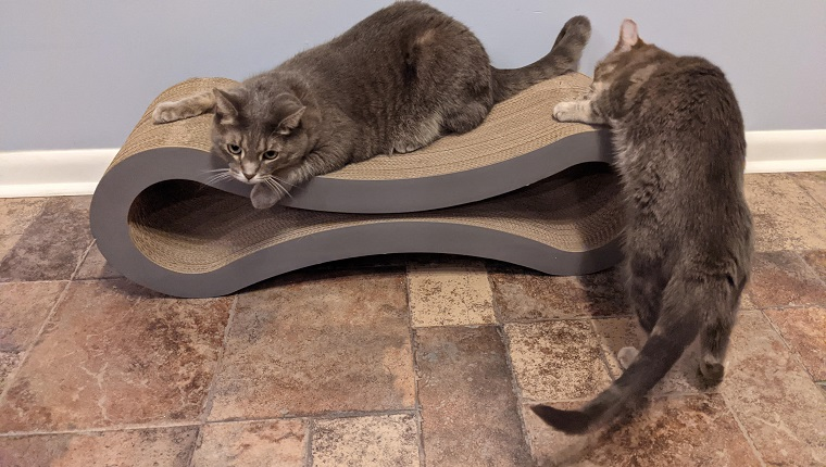 cats play on cat lounge