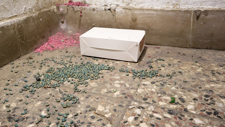 rat poison and white box on the basement floor Poison for control rats of residential building