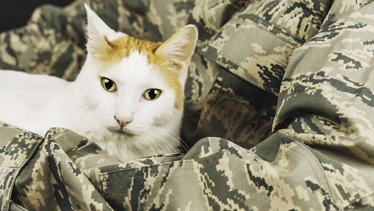 Disabled military service member holding his cat in a wheelchair