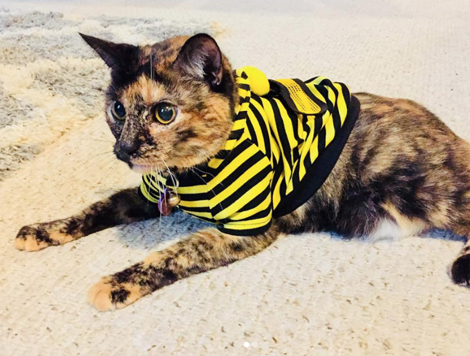 Bumble Cat Could Sting You