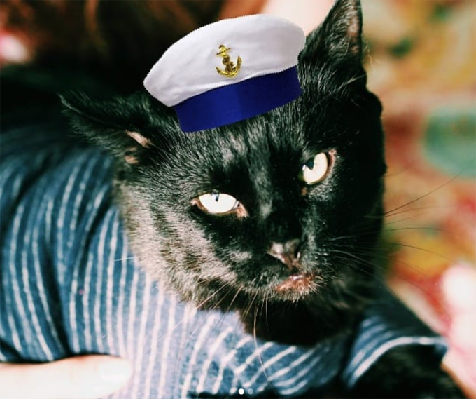 Sailor Cat Will Take You On A Long Voyage