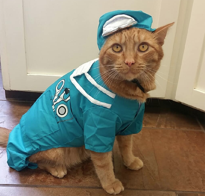 Paging Doctor Cat