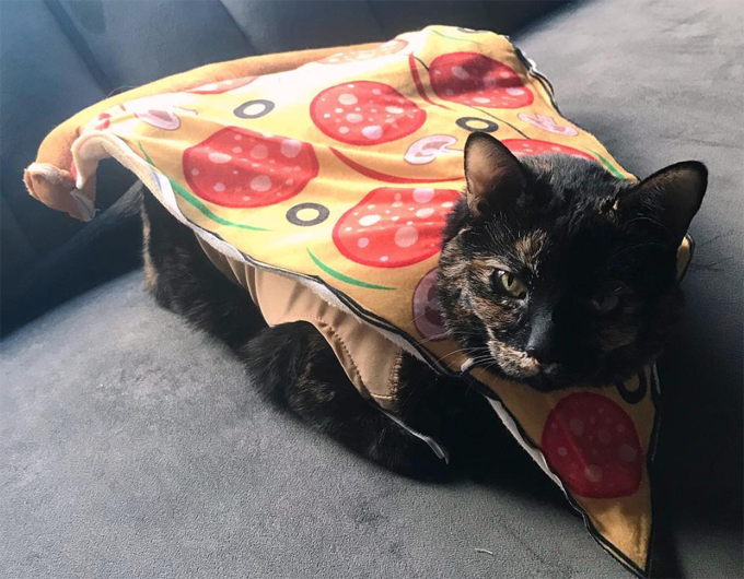 Pizza Kitty Is Delicious