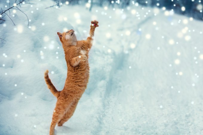 These cats love snow!
