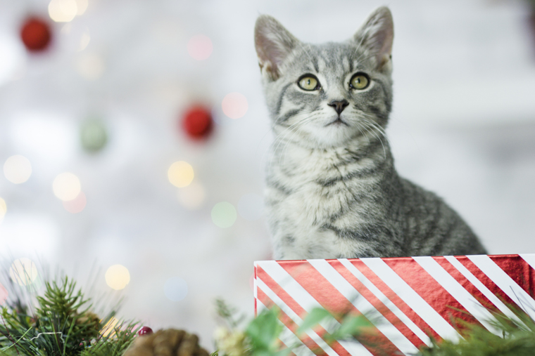 The earth loves recycled presents and so do these cats!
