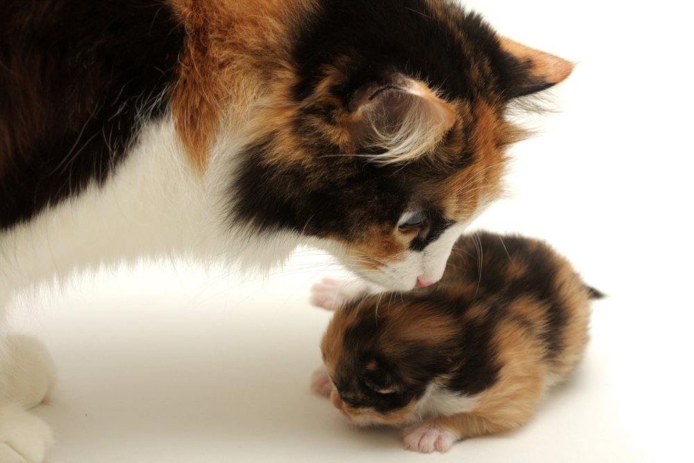 Mother's Day: Cat Moms And Their Kittens