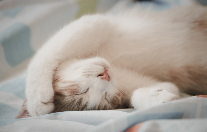 The average cat sleeps 16 to 18 hours per day.