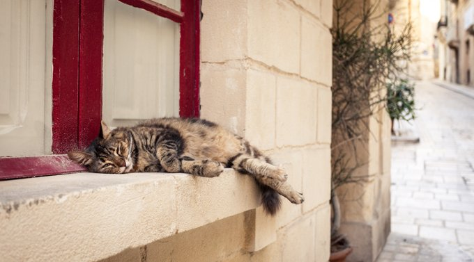Cats who fall five stories have a 90 percent survival rate.