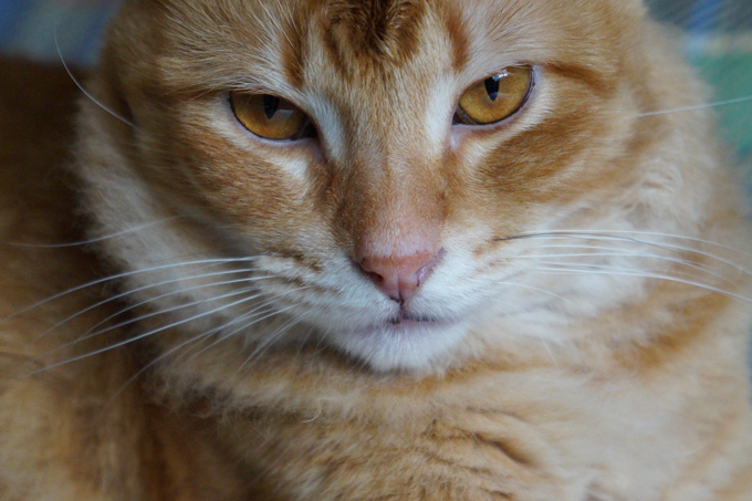 A cat's whiskers aren't just for show--they help cats detect objects and navigate in the dark.