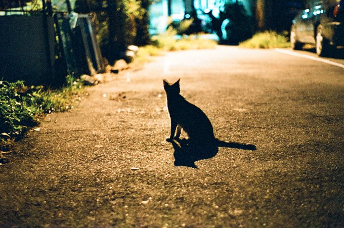 Cats cannot see in complete darkness, only at low light levels.