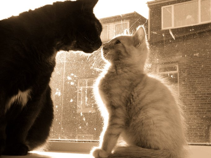 Humans greet each other by shaking hands; cats greet one another by touching their noses together.