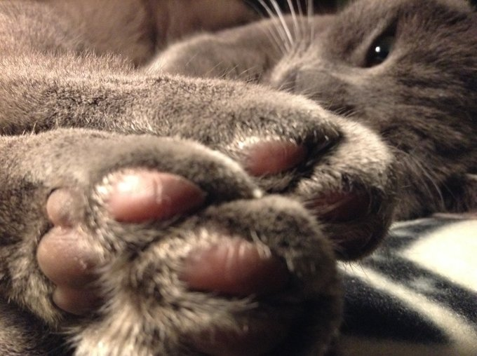 Cats knead with their paws when they are happy.