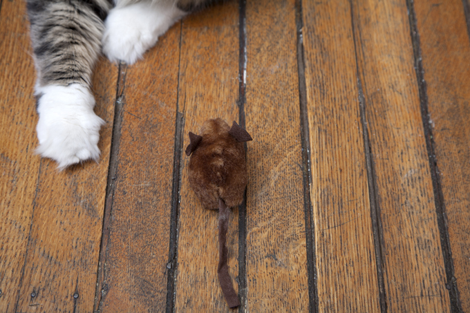 Cats can get tapeworm from eating mice.
