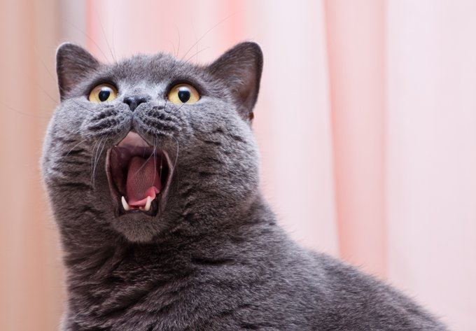 Cats can make more than 100 different vocal sounds.
