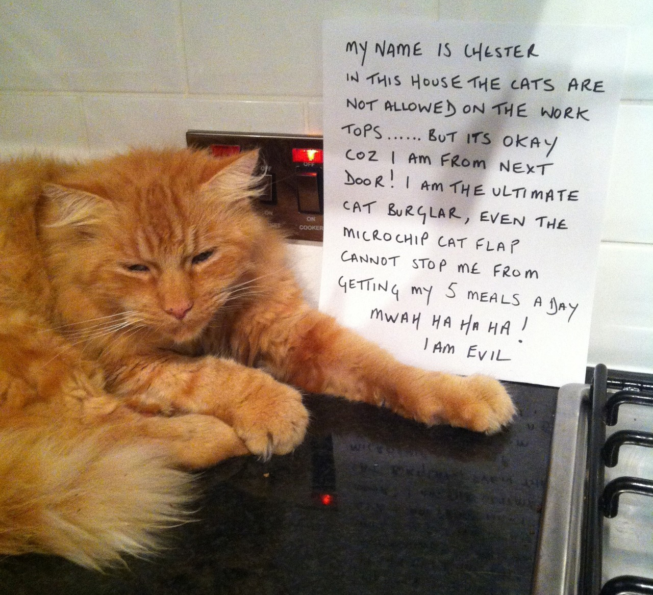 cat-shaming-my-name-is-chester-in-this-house-the-cats-are-not-allowed ...